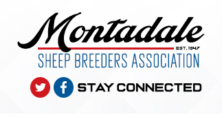 Montadale Sheep Breeders Association | Breed Information